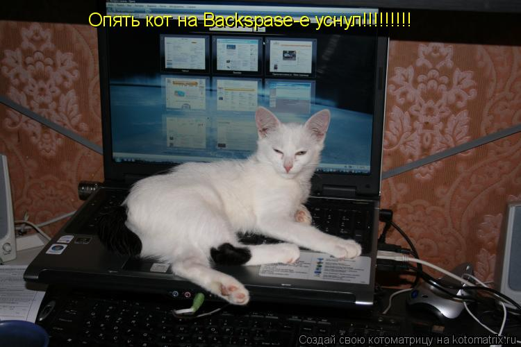 Котоматрица: Опять кот на Backspase-е уснул!!!!!!!!!