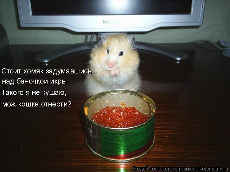 Котоматрица: Стоит хомяк задумавшись над баночкой икры Такого я не кушаю, мож кошке отнести?
