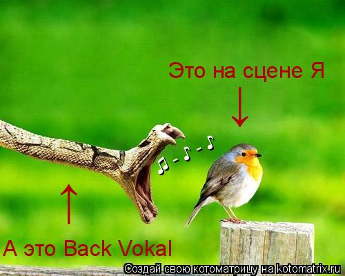 Котоматрица: ♫ - ♪ - ♪ Это на сцене Я А это Back Vokal ↓ ↑