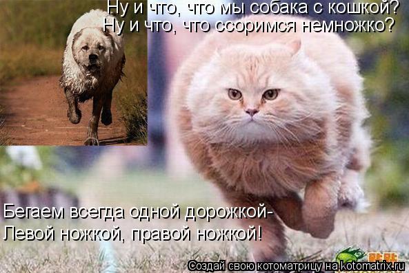 Котоматрица: Ну и что, что мы собака с кошкой? Ну и что, что ссоримся немножко? Бегаем всегда одной дорожкой- Левой ножкой, правой ножкой!
