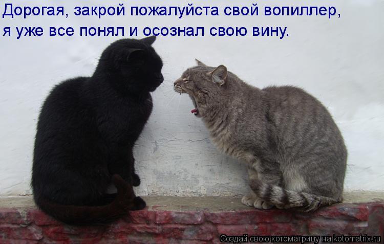 Котоматрица: Дорогая, закрой пожалуйста свой вопиллер, я уже все понял и осознал свою вину.