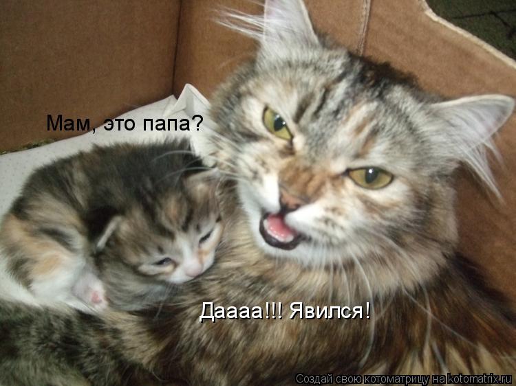 Котоматрица: Мам, это папа? Даааа!!! Явился!