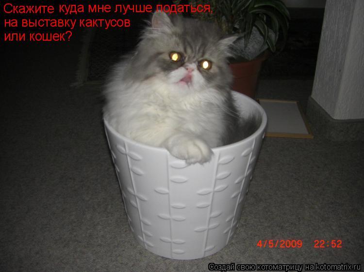 Котоматрица: Скажите куда мне лучше податься, на выставку кактусов  или кошек?