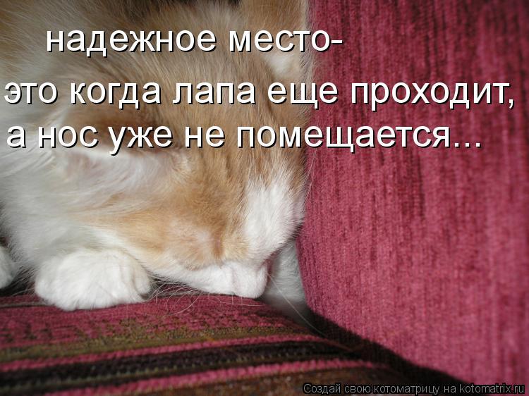 Котоматрица: надежное место-  это когда лапа еще проходит, а нос уже не помещается...