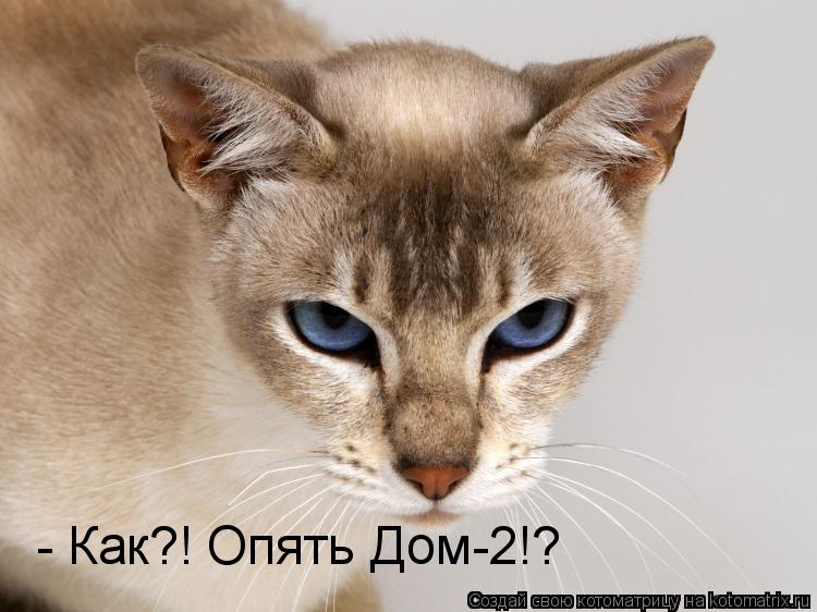 Котоматрица: - Как?! Опять Дом-2!?