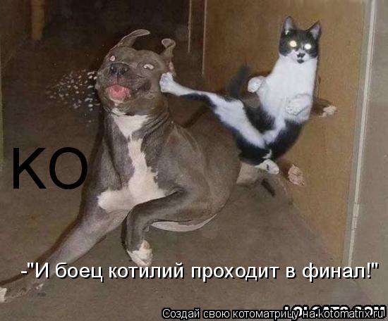 """Котоматрица: KO -""""И боец котилий проходит в финал!"""""""