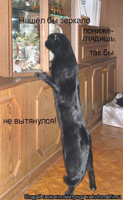 Котоматрица: Нашёл бы зеркало пониже- глядишь, так бы не вытянулся!