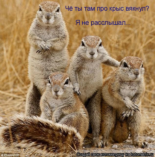 Котоматрица: Чё ты там про крыс вякнул? Я не расслышал...