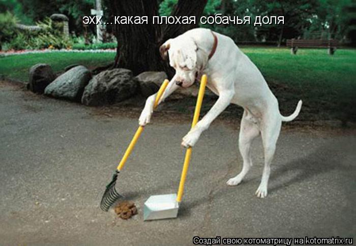 Котоматрица: эхх...какая плохая собачья доля