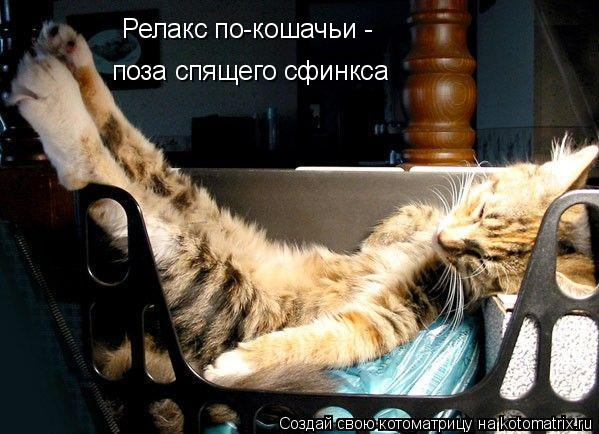 Котоматрица: Релакс по-кошачьи -  поза спящего сфинкса
