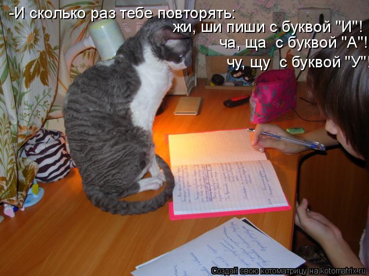 """Котоматрица: -И сколько раз тебе повторять:  жи, ши пиши с буквой """"И""""! ча, ща  с буквой """"А""""! чу, щу  с буквой """"У""""!"""