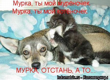 Котоматрица: Мурка, ты мой мурёночек.  Мурка, ты мой котёночек. МУРКА, ОТСТАНЬ, А ТО...