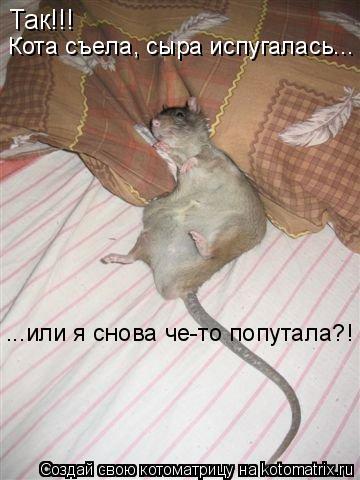 Котоматрица: Так!!! Кота съела, сыра испугалась... ...или я снова че-то попутала?!