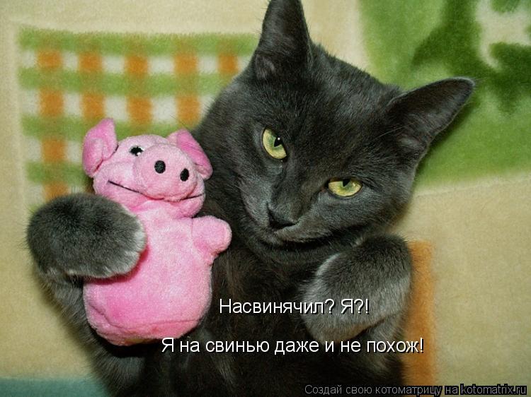 Котоматрица: Насвинячил? Я?! Я на свинью даже и не похож!
