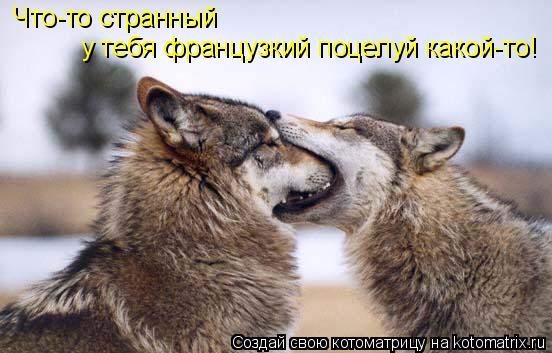 Котоматрица: Что-то странный  у тебя французкий поцелуй какой-то!