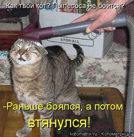 Котоматрица: -Как твой кот? Пылесоса не боится? -Раньше боялся, а потом втянулся!