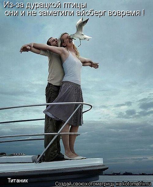 Котоматрица: Из-за дурацкой птицы они и не заметили айсберг вовремя ! Титаник