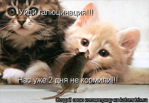 Котоматрица: Уйди галюцинация!!! Нас уже 2 дня не кормили!!!