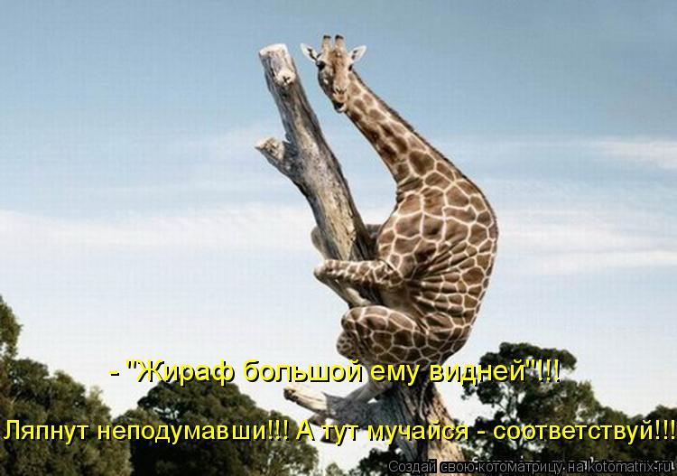 """Котоматрица: - """"Жираф большой ему видней""""!!! Ляпнут неподумавши!!! А тут мучайся - соответствуй!!!"""
