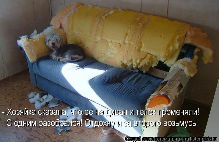 Котоматрица: - Хозяйка сказала, что её на диван и телек променяли!  С одним разобрался! Отдохну и за второго возьмусь!