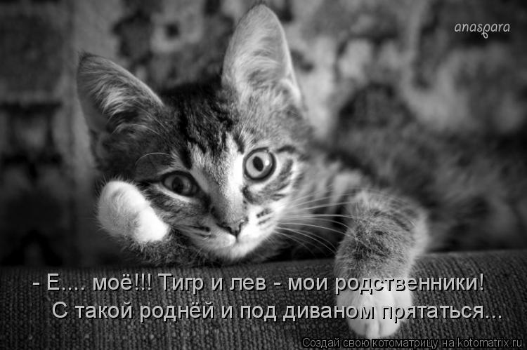 Котоматрица: - Е.... моё!!! Тигр и лев - мои родственники!  С такой роднёй и под диваном прятаться...
