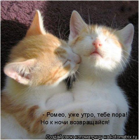 Котоматрица: - Ромео, уже утро, тебе пора!  Но к ночи возвращайся!