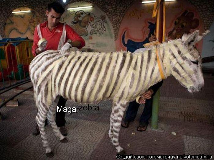 Котоматрица: Maga -zebra