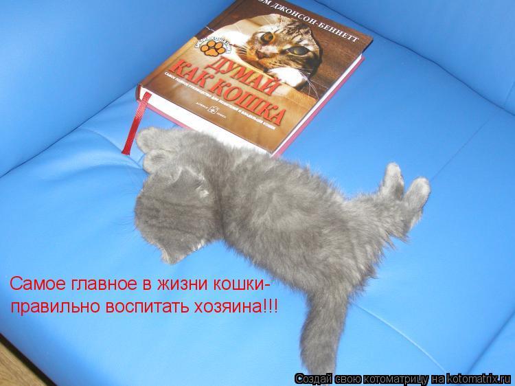 Котоматрица: Самое главное в жизни кошки- правильно воспитать хозяина!!!