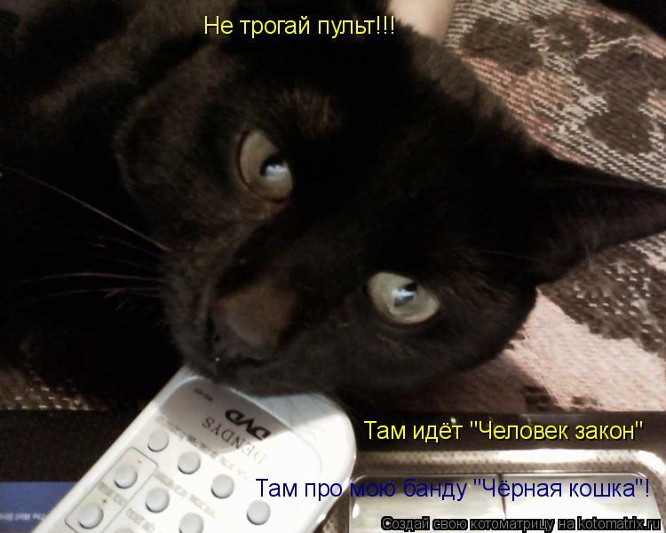 "Котоматрица: Не трогай пульт!!! Там идёт ""Человек закон"" Там про мою банду ""Чёрная кошка""!"
