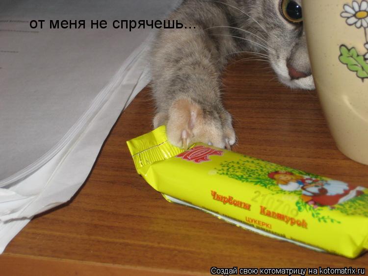 Котоматрица: от меня не спрячешь...