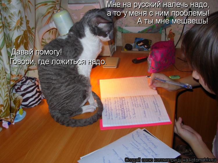 Котоматрица: Мне на русский налечь надо, а то у меня с ним проблемы! А ты мне мешаешь! Давай помогу! Говори, где ложиться надо.