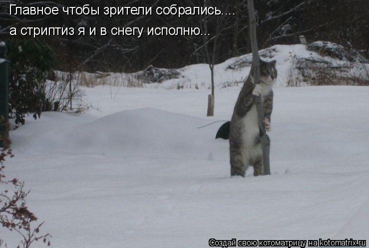 Котоматрица: Главное чтобы зрители собрались.... а стриптиз я и в снегу исполню...
