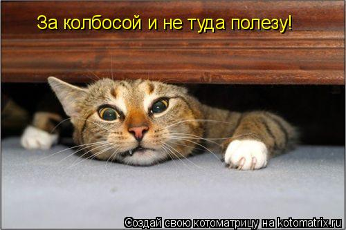 Котоматрица: За колбосой и не туда полезу!