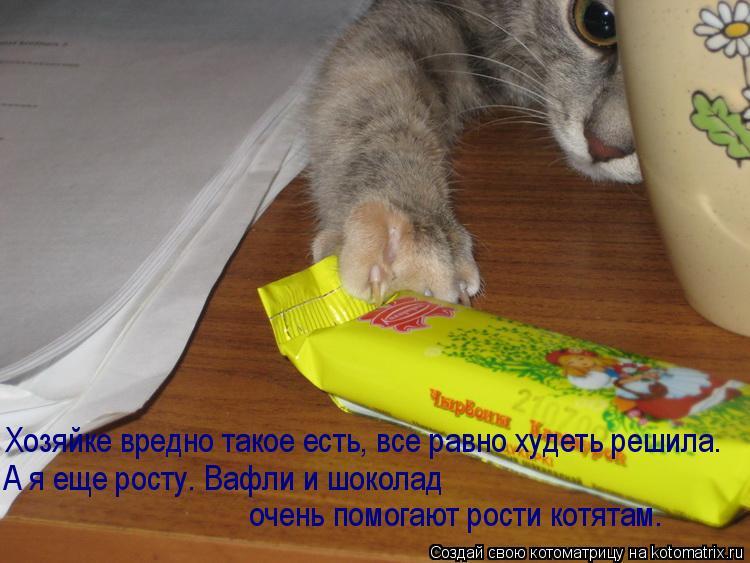 Котоматрица: Хозяйке вредно такое есть, все равно худеть решила. А я еще росту. Вафли и шоколад  очень помогают рости котятам.