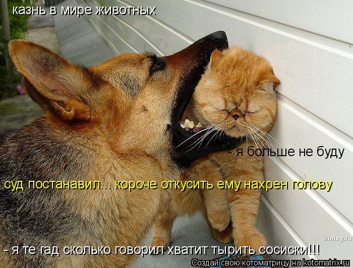 Котоматрица: казнь в мире животных - я те гад сколько говорил хватит тырить сосиски!!! - я больше не буду  суд постанавил... короче откусить ему нахрен голов