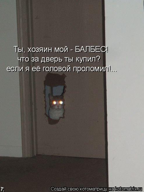 Котоматрица: Ты, хозяин мой - БАЛБЕС! что за дверь ты купил? если я её головой проломил!...