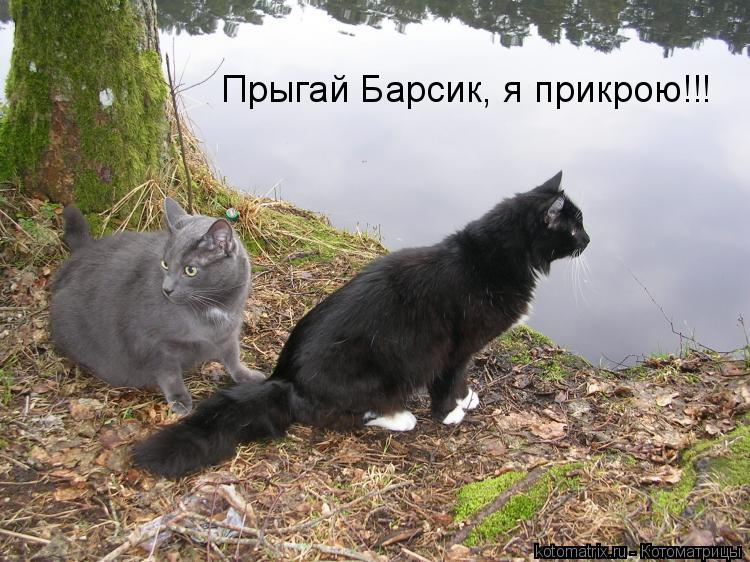 Котоматрица: Прыгай Барсик, я прикрою!!!