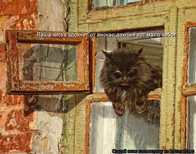 Котоматрица: Ваша киска здохнет от вискас,дохлый кот мало забот