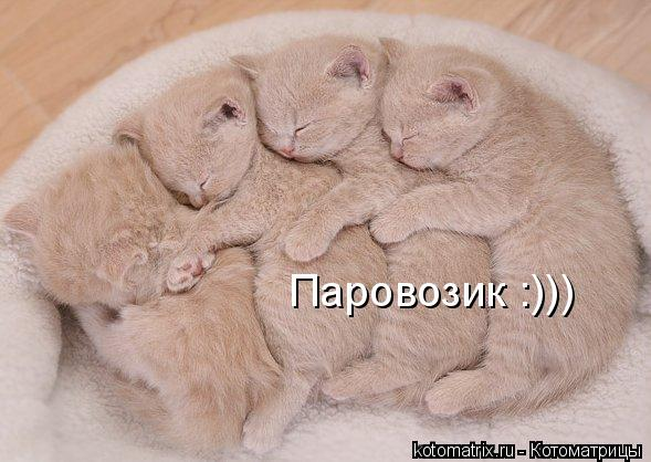 Котоматрица: Паровозик :)))