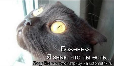 Котоматрица: Я знаю что ты есть... Боженька!