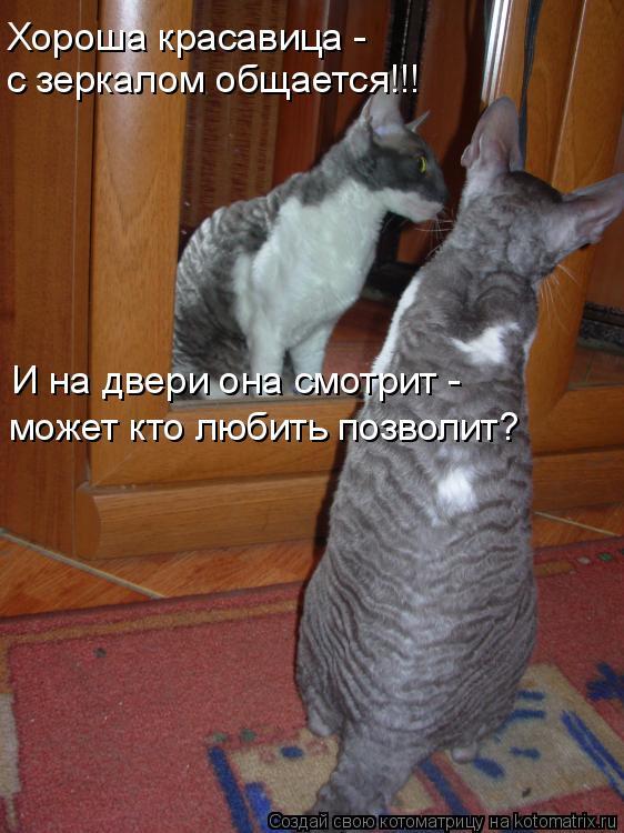 Котоматрица: Хороша красавица - с зеркалом общается!!! И на двери она смотрит - может кто любить позволит?