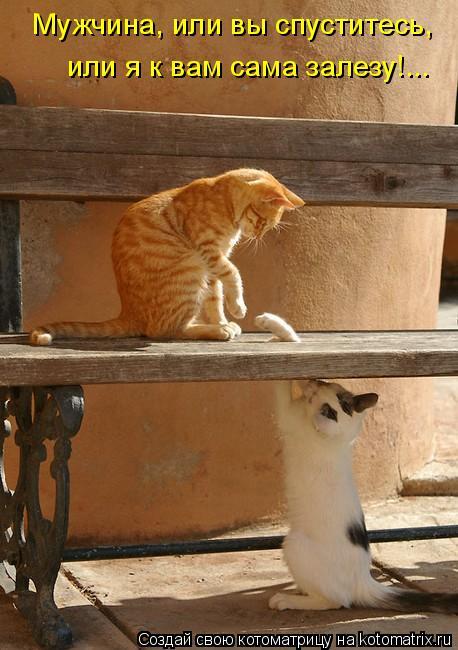 Котоматрица: Мужчина, или вы спуститесь,  или я к вам сама залезу!...