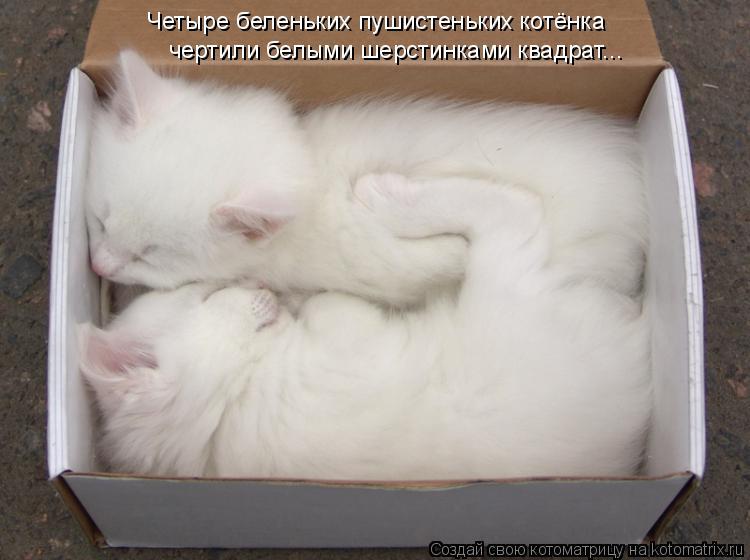 Котоматрица: Четыре беленьких пушистеньких котёнка чертили белыми шерстинками квадрат...