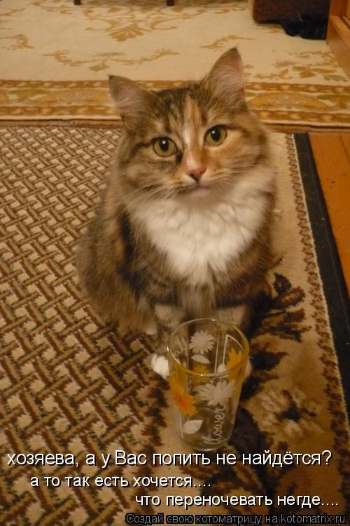 Котоматрица: хозяева, а у Вас попить не найдётся? а то так есть хочется.... что переночевать негде....