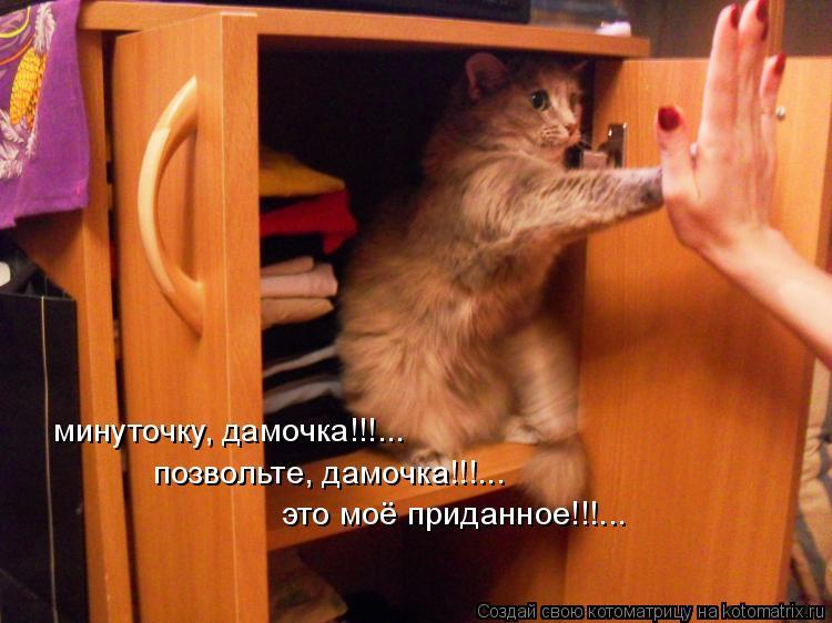 Котоматрица: минуточку, дамочка!!!... позвольте, дамочка!!!... это моё приданное!!!...