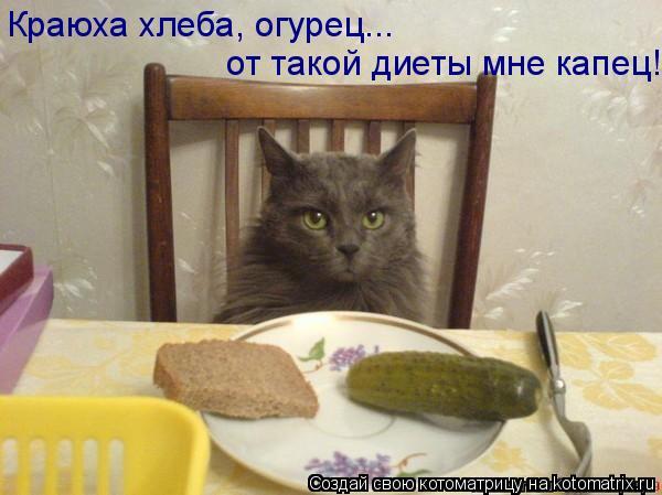 Котоматрица: Краюха хлеба, огурец... от такой диеты мне капец!