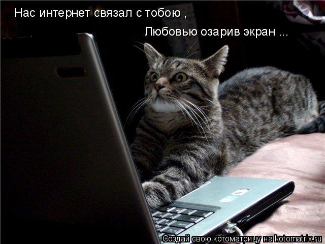 Котоматрица: Нас интернет связал с тобою , Любовью озарив экран ...
