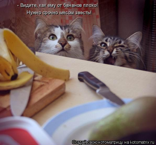 Котоматрица: - Видите, как ему от бананов плохо! Дайте срочно мяса! Нужно срочно мясом заесть!
