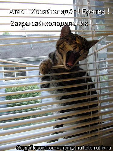 Котоматрица: Атас ! Хозяйка идёт ! Братва ! Закрывай холодильник !...