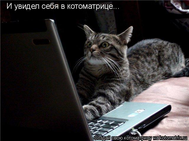 Котоматрица: И увидел себя в котоматрице...